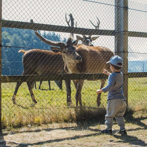 Tabara copii Pastel Chalet, Un loc de poveste, Tabara august 2017 (30)