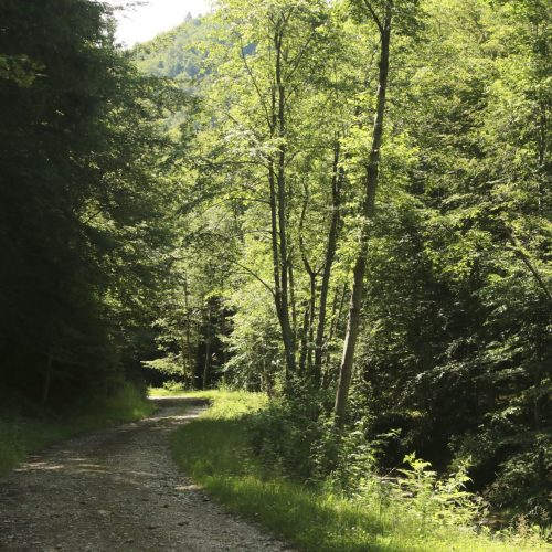 Pastel Chalet, natura