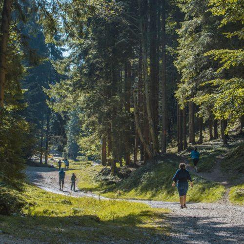 Pastel Chalet, natura, descoperim, aer curat, outdoor (7)